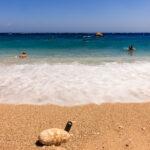 Κάρπαθος, παραλία Άπελλα